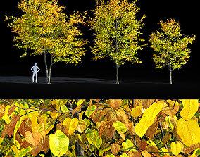 3D Linden tree autumn