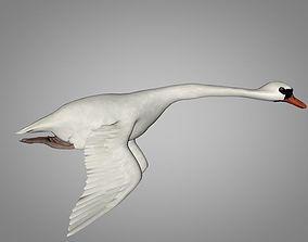 White and black Swan 3D model
