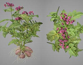 Flowering potatoes 3D