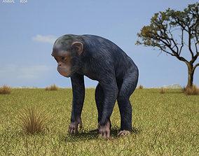 3D model Common Chimpanzee Pan Troglodytes