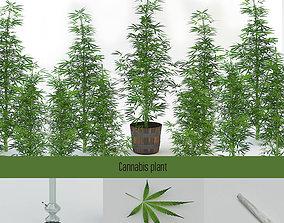 Cannabis Sativa 3D asset