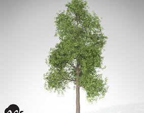 XfrogPlants Ginkgo 3D