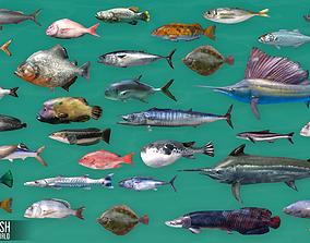 Ocean fish - underwater world 3D model