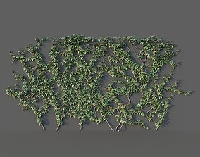 Grape Wall Set 3D model