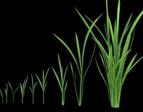 low-poly YOUNG PADDY PLANT 3D MODEL LOW POLY