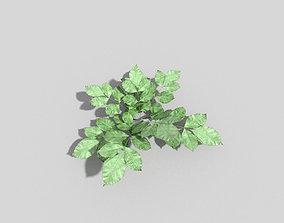 Plant hedge 3D asset low-poly