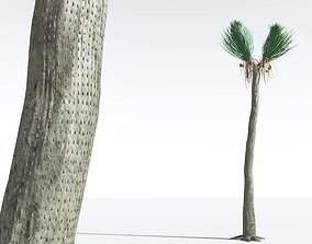 EVERYPlant Ovate Sigillaria 02 --18 Models--