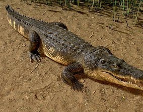 3D rigged Realistic Crocodile Rig