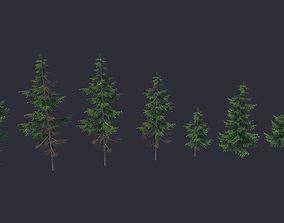 3D asset Conifer