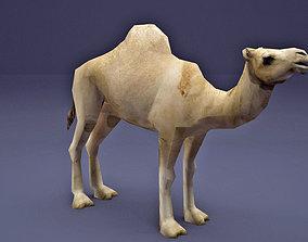 Low Poly Camel Model 3D asset
