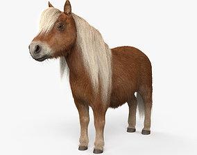 3D model Shetland Pony HD