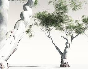EVERYPlant River Red Gum 14 3D model