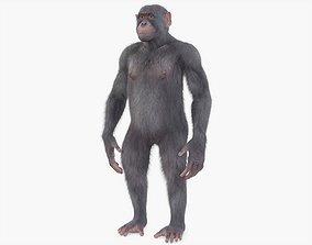 3D asset Chimpanzee Rigged Fur