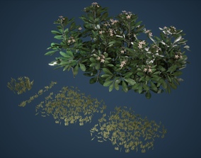 3D asset Grass Patch and Bush Game Ready