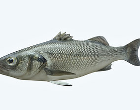Barfish 3D model