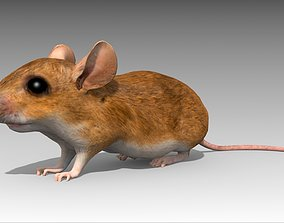 Mouse 3D model animated