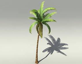 dae 3D model Palm tree