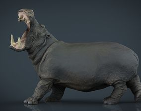 3D model game-ready Hippopotamus