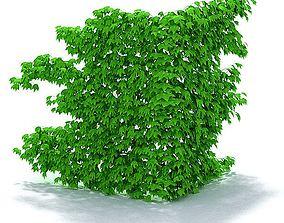 Lush Green Ivy 3D