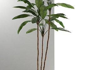 leaves 3D model Cordyline Plant