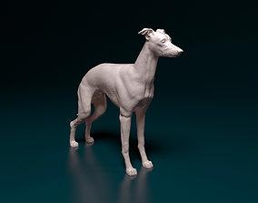 Italian Greyhound dog 3D print model