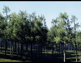 Aspen Tree Set 3D asset