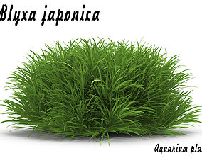 3D Blyxa japonica