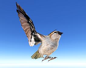 3D model animated Sparrow Bird