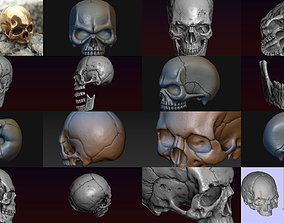 3D model Skulls collection