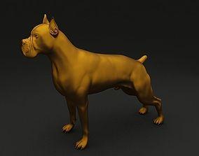 Boxer High Detailed 3D Model