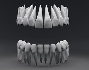 3D printable model Permanent Teeth High Quality