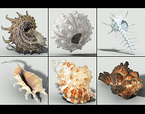 6 Sea Shell Collection Photorealistic 3D model