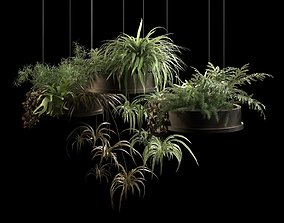 Hanging Pots with Plants 2 3D model