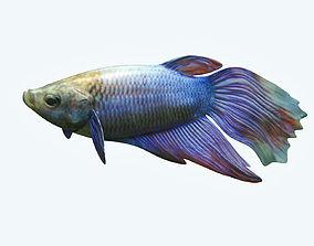 Betta Fish 1 3D model