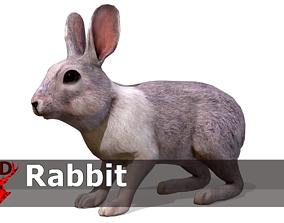 3D model animated Rabbit