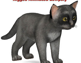 Cat grey 3D asset