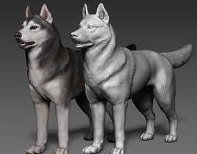 Siberian Husky high polygon 3D model with polypaint