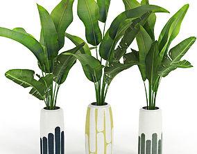 3D model Banana palm pot potted