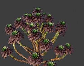 XfrogPlants Tree Houseleek - Aeonium 3D