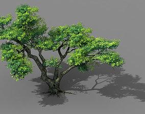 pine 3D Fairy Mountains - Tree 01