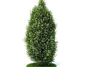 Tall Green Bush 3D model
