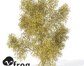 3D XfrogPlants Autumn Honey Locust1