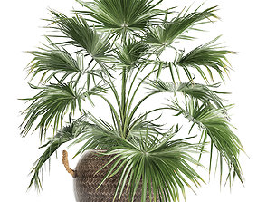 Palm tree for the interior 433 3D model