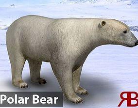 Polar Bear 3D asset animated