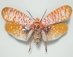 Cicada Aphaena Submaculata Cambodia Insect 3D model