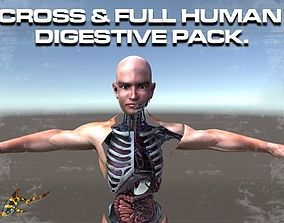 CROSS AND FULL DIGESTIVE PACK 3D model animated