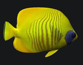 3D asset Cheek Butterfly fish
