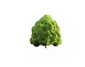 Low Poly Tree Stylish 3D model game-ready
