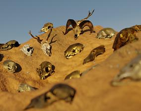 3D model skull asset