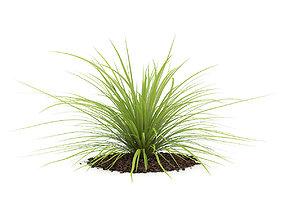 Yucca Plant Yucca baileyi 3D